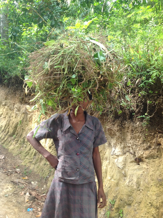 carrying crops