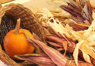 autumn pumpkin and corn